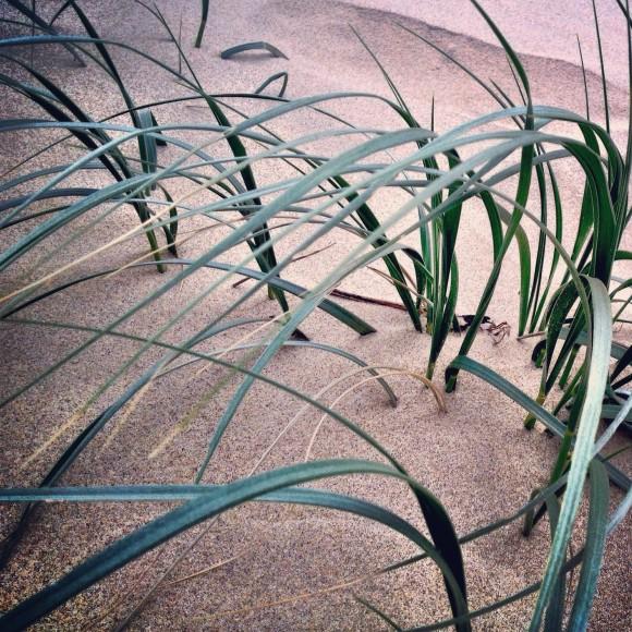 serena-renner-goq-seagrass
